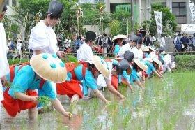 留学生が御田植祭に参加